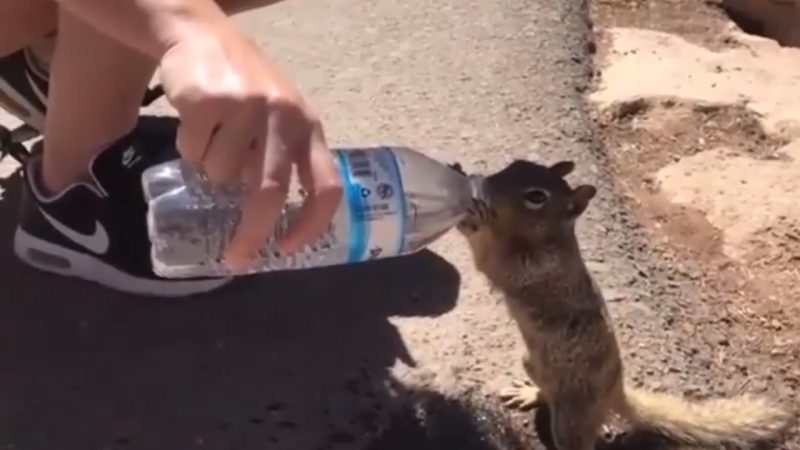 This video was shot in Arizona, where the high temperatures left this squirrel tired.